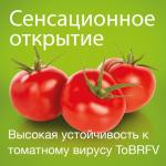 В конце 2020 года команда селекционеров Enza Zaden открыла ген, обеспечивающий высокую устойчивость к быстро распространяющемуся во всем мире тобамовирусу. Первые испытания устойчивых к вирусу гибридов томата дали отличные результаты.